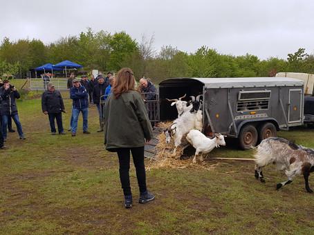 Auf dem Steffelkopf sind die Ziegen 🐐 los! Beweidungsprojekt am Steffelberg