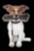 Die HundeLady - Jack Russel mit Leine