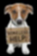 Die HundeLady - Jack Russel mit Schild