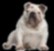 Die HundeLady - Mops
