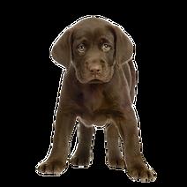 Die HundeLady - Welpe braun