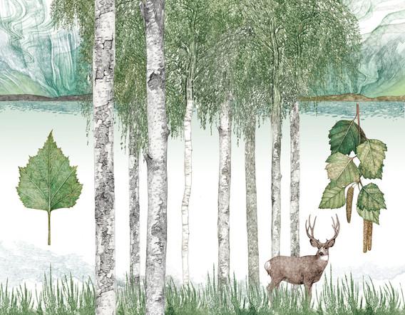 lucilleclerc-Silver-birch-Betula pendula-colour copie.jpg
