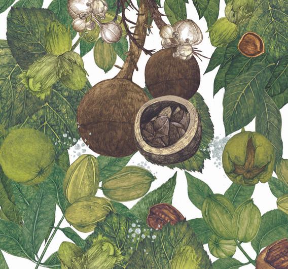 LucilleClerc-Richnuts2.jpeg