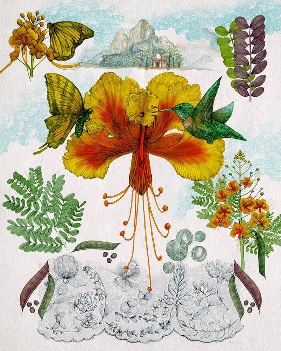 LucilleClerc-peacockflower.jpg