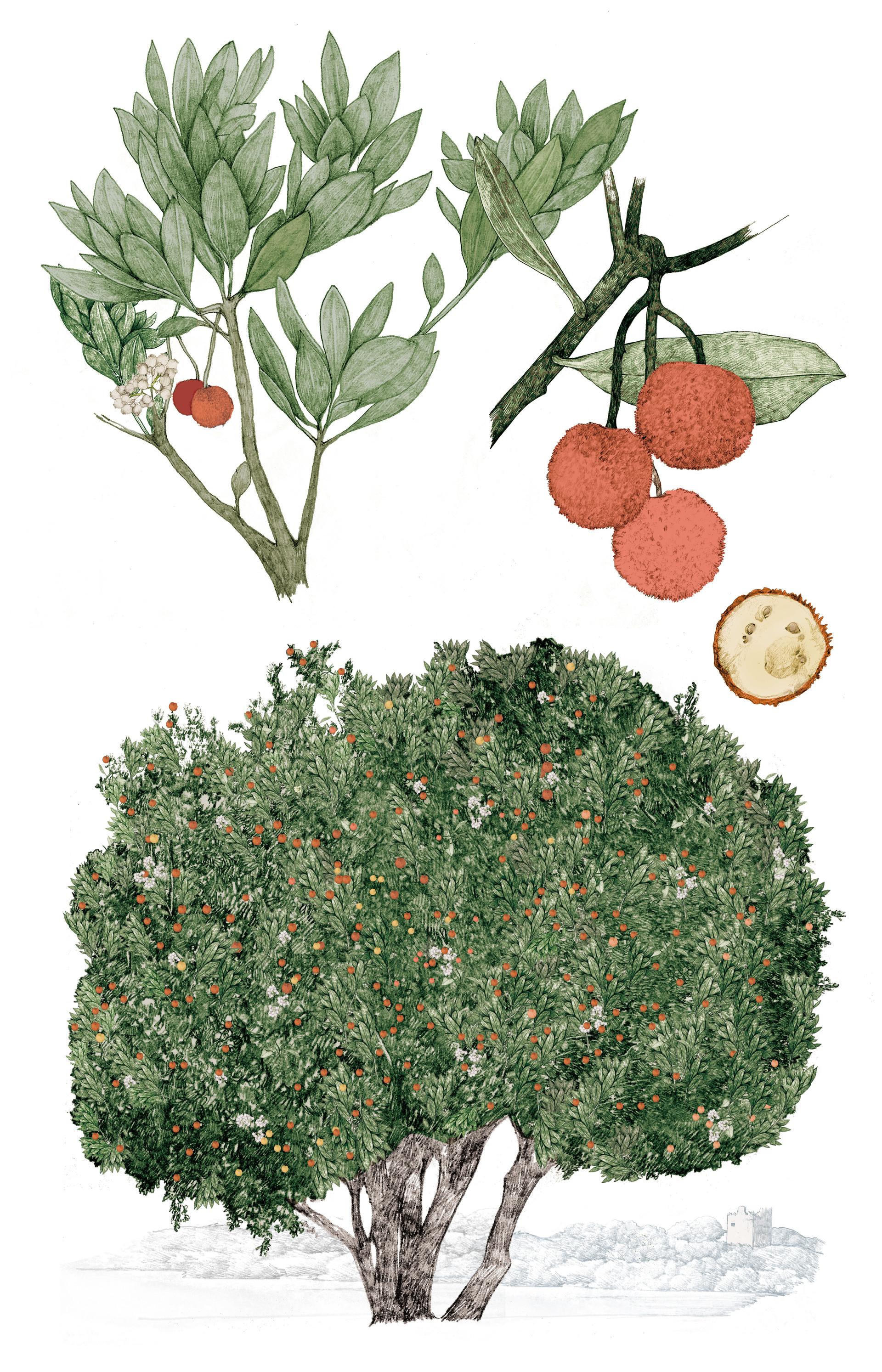 lucilleclerc-strawberry-tree-colour.jpg