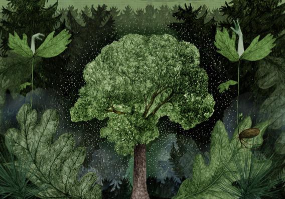 LucilleClerc-déforestation.jpg