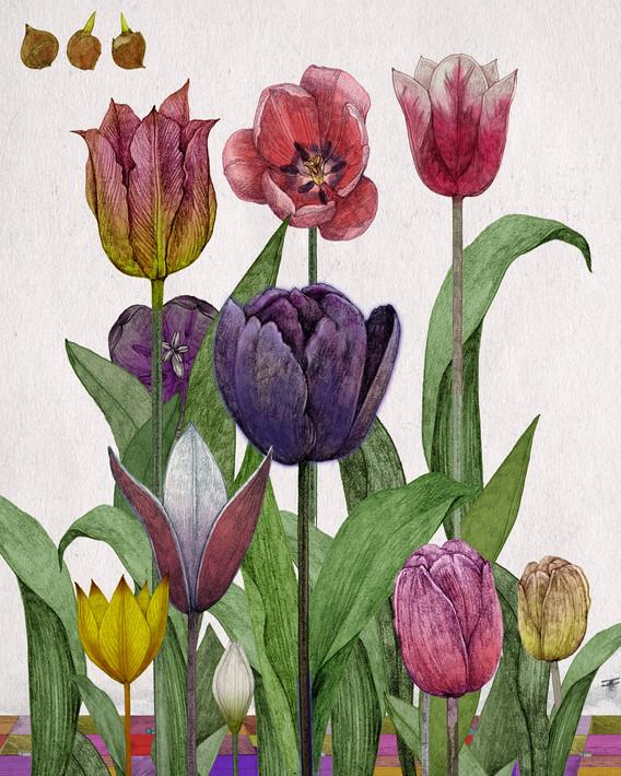 LucilleClerc-tulip.jpg