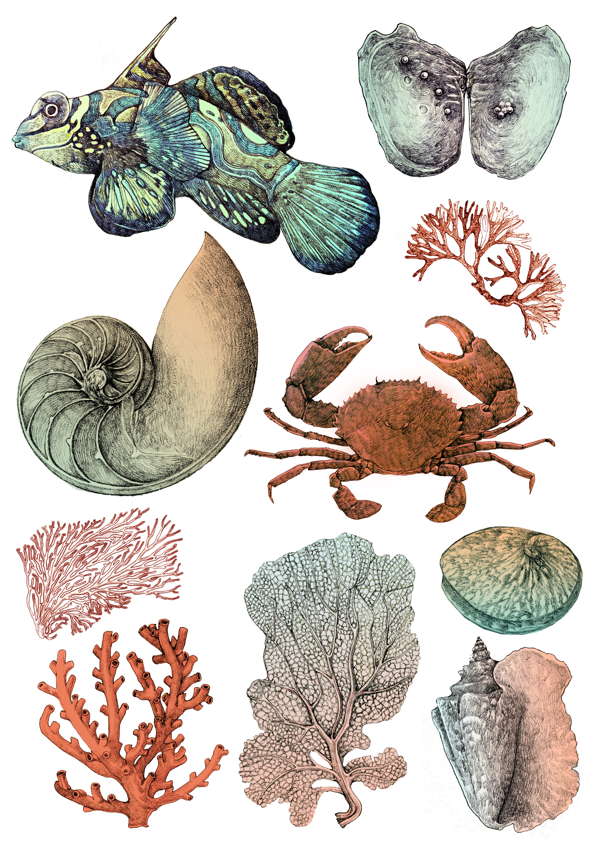 fish+coral.jpg