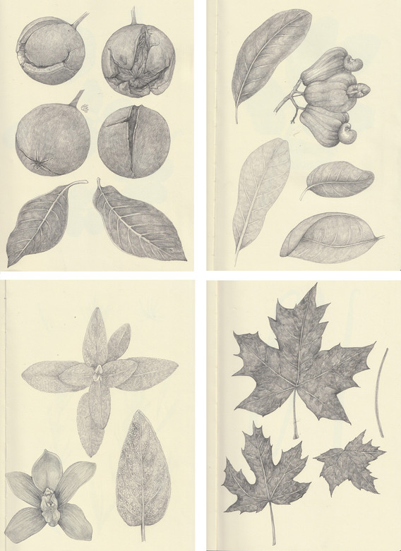 LucilleClerc-nuts-sketches.jpg