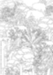 LucilleClerc©GrowForestWallpaper1.jpg