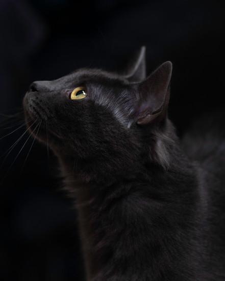 Cat AWS 05-22-19.jpg