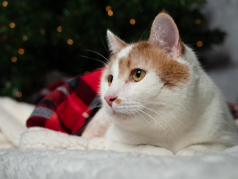 Cat 2 11-17-19 (1 of 1).jpg