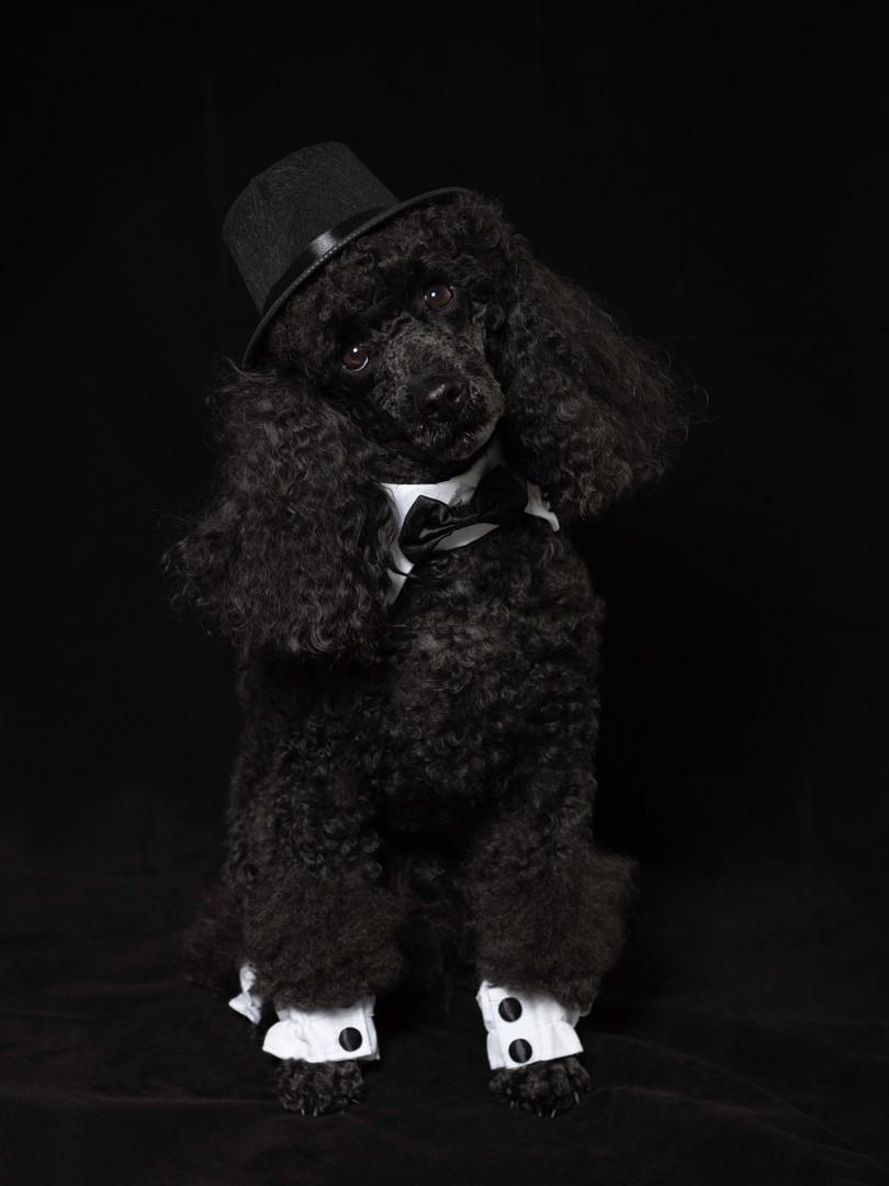 Stormy Tuxedo sRGB.jpg