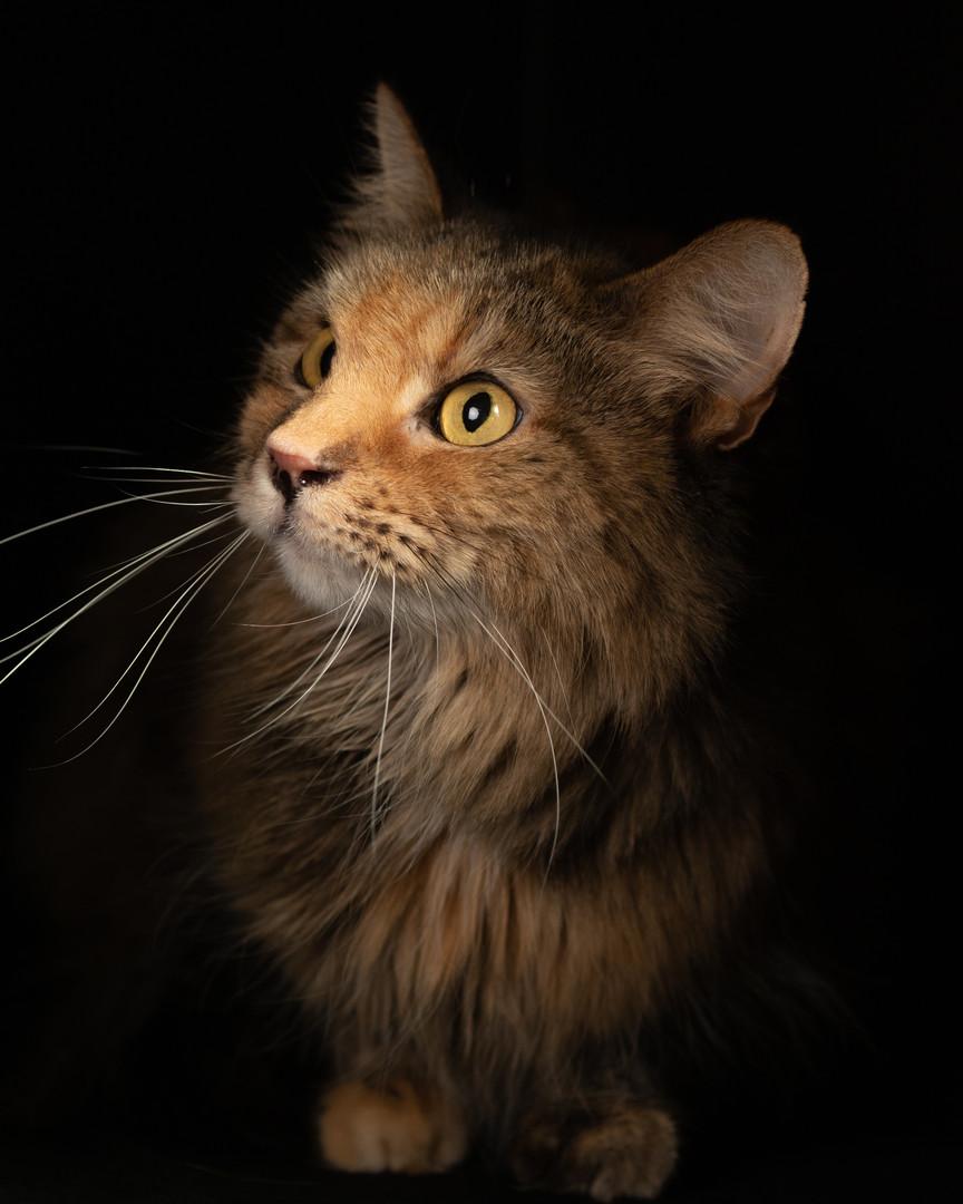 Cat 1 11-17-19 (1 of 1).jpg