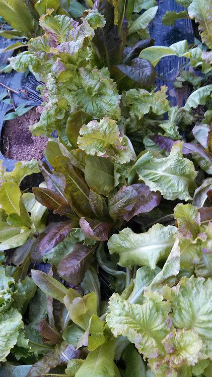 Mezclum Salad