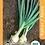 """Thumbnail: Cebolla / Onion """"Valencia"""""""