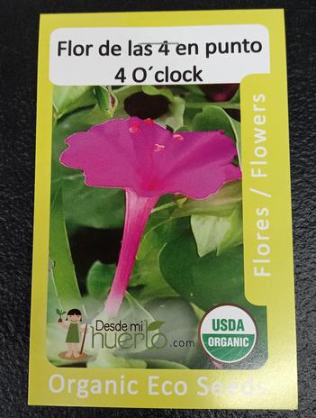Flor de las 4 en punto  4 O'clock