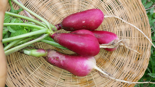 "Radish ""French Breakfast"""