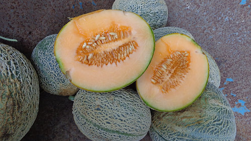 "Melon ""Cantaloupe"""