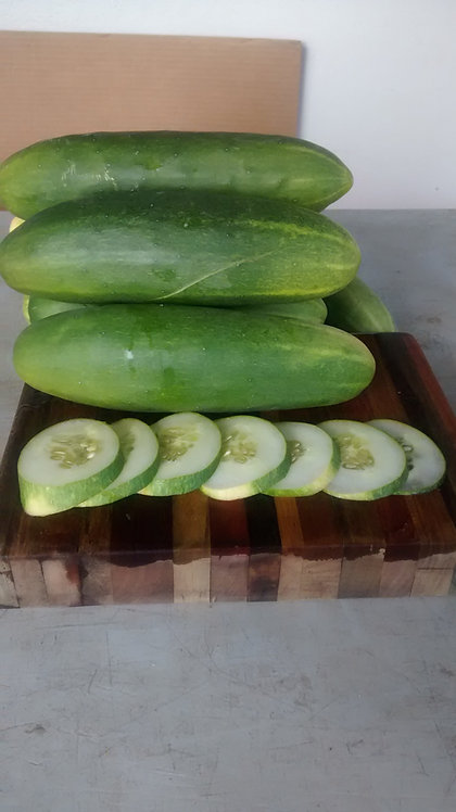 "Cucumber ""Marketmore 76"""