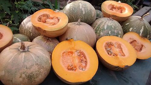 """Pumpkin """"Taína Dorada"""""""