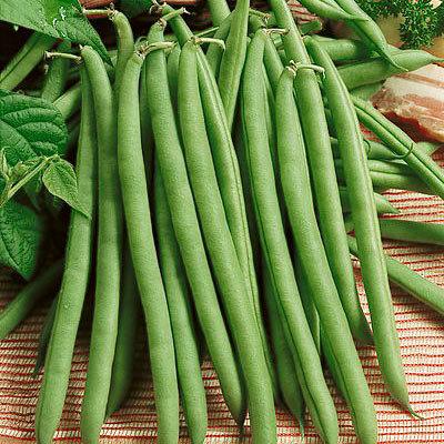 """Beans Green """"Provider"""""""