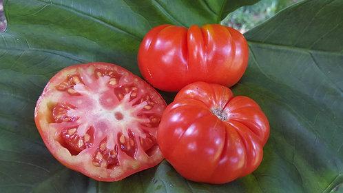 """Tomato Beefsteak """"Puerto Rico Heirloom"""""""