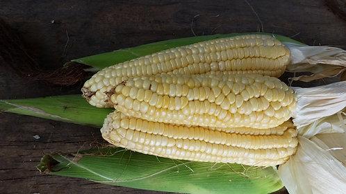 """Maiz / Corn """"Suresweet"""""""