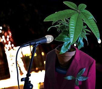Monsieur plante verte plus flashy.jpg