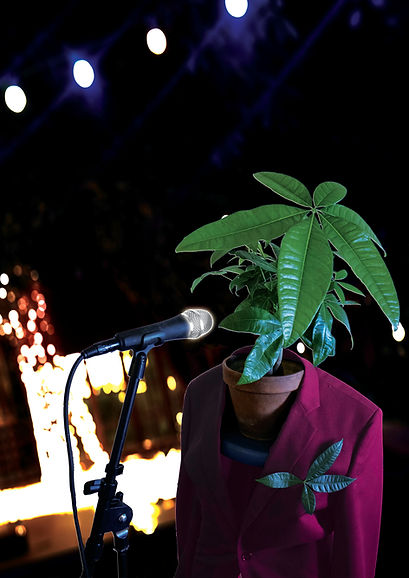 Monsieur plante verte plus flashy.jpg