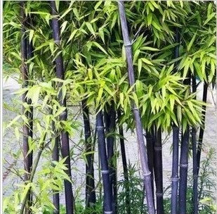 Multy Colour Bamboo Seeds