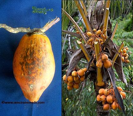 Murusi Coconut 2 seeds