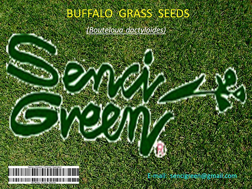 Buffalo Grass Seeds (Bouteloua dactyloides)