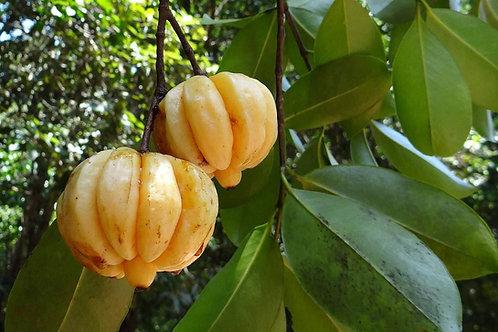 Dried Garcinia Cambogia 100% Organic