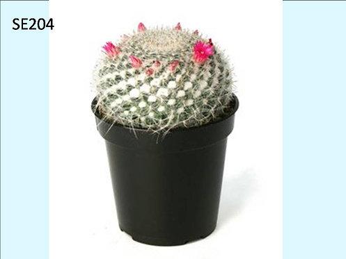Cactus Plant  SE204