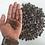 Sepalika Seeds (Nyctanthes arbor-tristis) Flower Seeds
