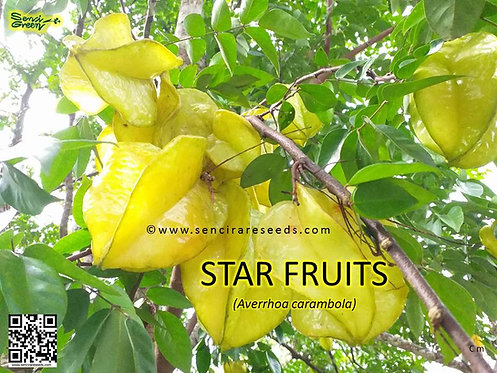 "Star Fruit [Averrhoa carambola] Seeds (100% Fresh) ""senci rare seeds area"""
