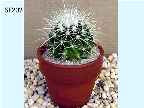 Cactus Plant  SE202