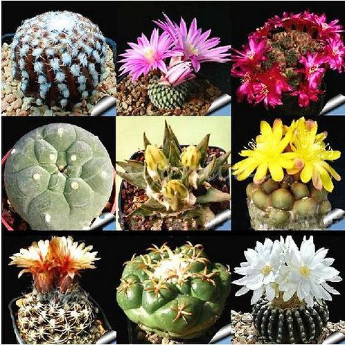 SE001 cactus seeds