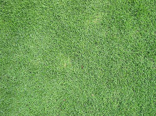 100g Vietnam Grass Seeds Packet