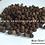 Blue Olive Seeds (Elaeocarpus serratus)