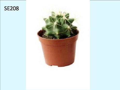 Cactus Plant  SE208