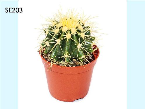 Cactus Plant  SE203