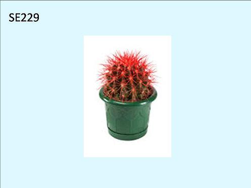 Cactus Plant  SE229
