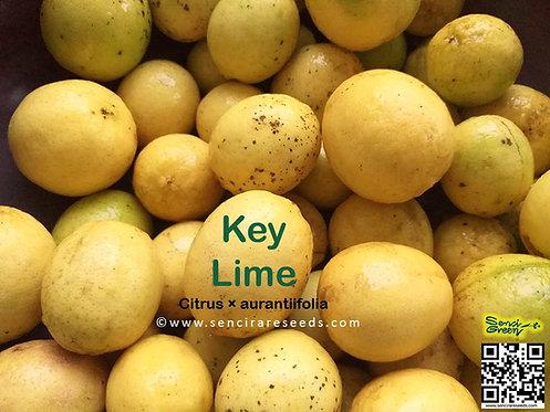 Key Lime (Citrus × aurantiifolia) citrus hybrid FRESH seeds