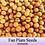 "Fan palm seeds ""licuala grandis"" fresh seeds"