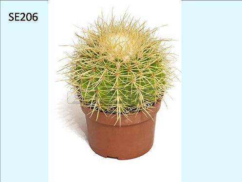 Cactus Plant  SE206