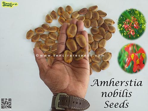 Amherstia nobilis , Pride of burma (04 seeds)