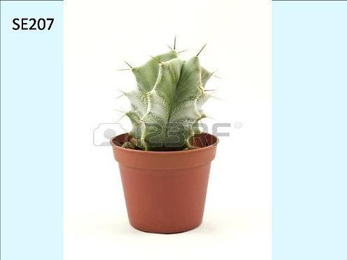 Cactus Plant  SE207