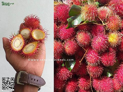 """Rambutan Seeds """"Nephelium lappaceum"""" 100% Fresh"""